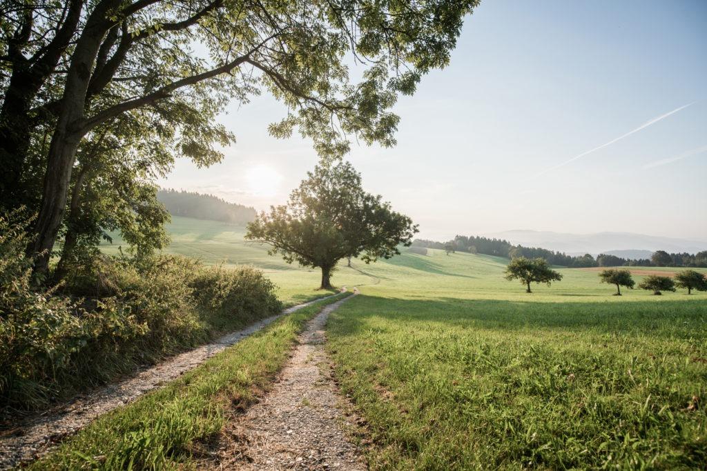 Österrike skog